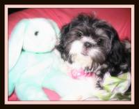 Zoey's Easter bunny