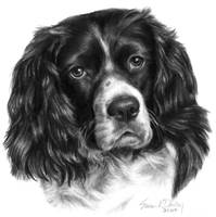Parti-Colored Cocker Spaniel