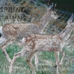 """SPRING FAWNS"" by pets"