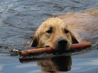 Love of Retrieving
