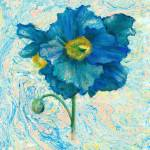 """Himalayan Blue Poppy"" by suifee"