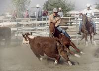 Cow Horse Cutting