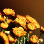 """flowers"" by eddmsa"