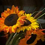 """Sunflowers--formatted for Gallery Wrap"" by DigiPix"