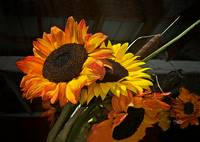 Sunflowers--formatted for Gallery Wrap