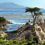 """Lone Cypress Tree"" by LorrieMorrison"