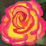 """""""pink yellow rose"""" by scrapydapy"""