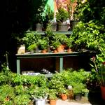 """Urban Garden"" by LRobinsonIII"
