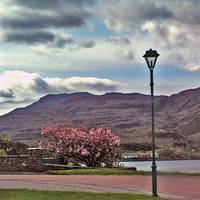 May In Shieldaig 1