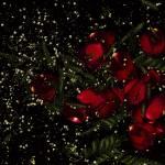 """""""Rose Galaxy"""" by LindaCavaney"""