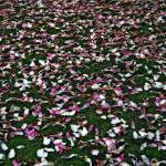"""Carpet of Inevitability"" by kevinbrown"
