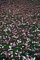 Carpet of Inevitability