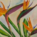 """Bird Of Paradise by Sonya P."" by flowerswithfeelings"