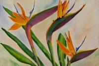 Bird Of Paradise by Sonya P.