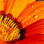 """Bright Orange"" by springblossomprints"