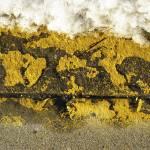 """""""Yellow #891"""" by GordonKeiser"""