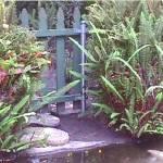"""gardenpond"" by EarthyGirl"