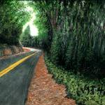 """""""Road to Seacliff"""" by McHenryDesigns"""