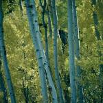 """Aspen glow"" by photosbytravis"