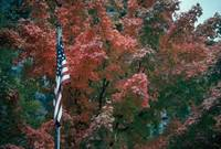 Fall color flag