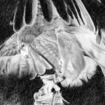 """eagle"" by Torian"
