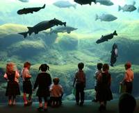Children at the Aquarium