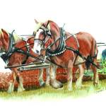 """draft horses"" by bubbas"