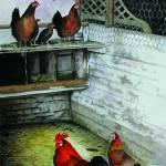 """""""chicken coop"""" by bubbas"""
