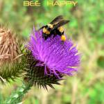 """""""Bee Happy poster"""" by rayjacque"""