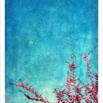 """""""Judas Tree"""" by Myriam70"""