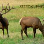 """""""Keeping Watch poster"""" by rayjacque"""