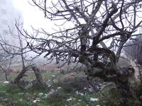 Palestine Winter 2008