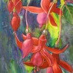 """Fuschia Flowers by Sonya P"" by flowerswithfeelings"