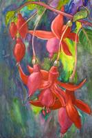 Fuschia Flowers by Sonya P