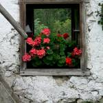 """""""Two Windows"""" by pwos65"""
