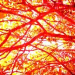 """Crimson & Gold Autmn"" by TTsTreasures"