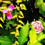 """Morning Dew"" by TTsTreasures"