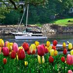 """Spring Splash of Color in Ogunquit, Maine"" by DigiPix"
