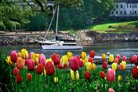 Spring Splash of Color in Ogunquit, Maine