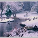 """Ducks in Snow"" by DeeprBlue"