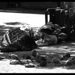 """Homeless and pigeon"" by lecolibri"