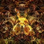 """Autumn"" by subhash"