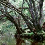 """""""Enchanted Woods"""" by HappyEye"""