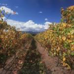 """Chandon Vineyards, Yarra Valley, Victoria 2005"" by worldwidearchive"