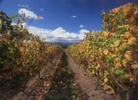 Chandon Vineyards, Yarra Valley, Victoria 2005 by WorldWide Archive