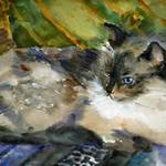 """Siamese Basking, Watercolor Painting Animal Cat Ar"" by schulmanart"