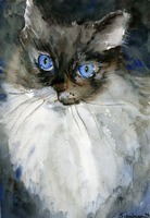 Siamese Gaze, Watercolor Painting Animal Cat Art