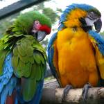 """Macaws"" by Gazographer"