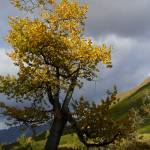 """falltree"" by Annalucia"
