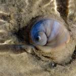 """""""Snail"""" by dwydra"""